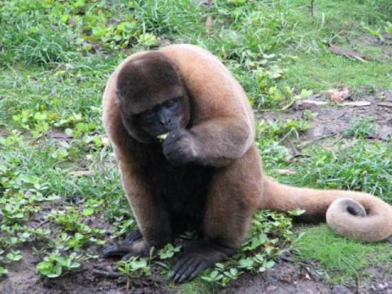 rencontre en Amazonie equatorienne