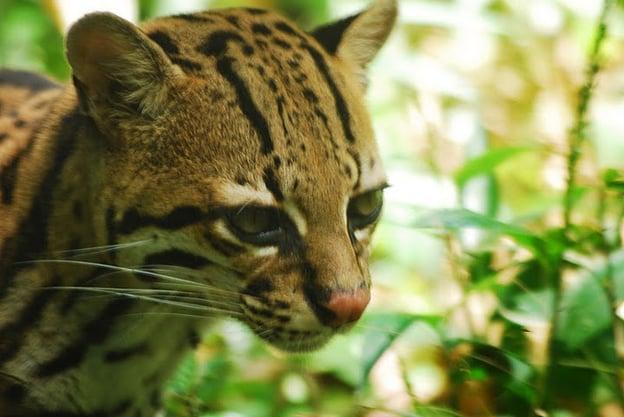 Jungle - Équateur
