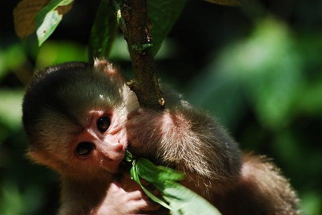 Jungle - Circuit Équateur