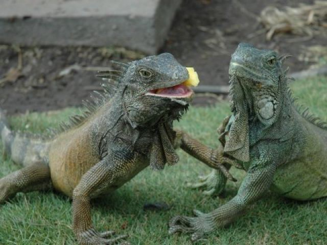 faune de Guayaquil, Equateur