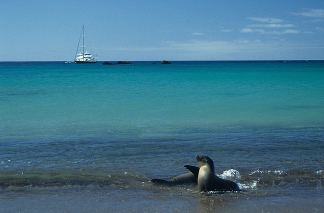 Lions de mer aux Galapagos copyright Derek Keats