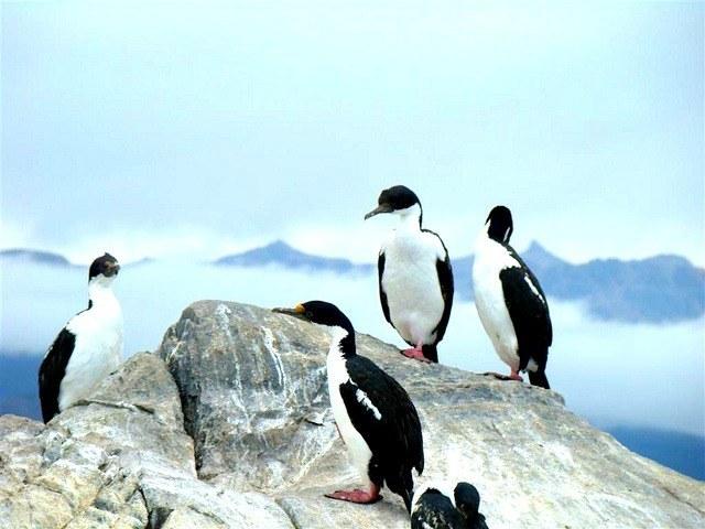 Que voir en Patagonie ? Île Magdallena