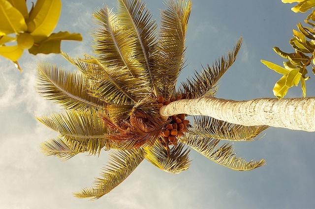 Sous les cocotiers, la plage
