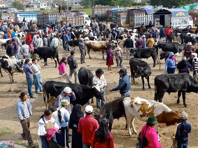Marché aux bovins d'Otovalo