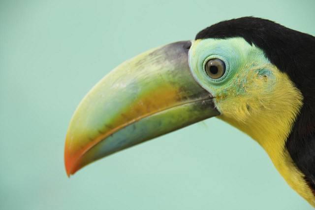 oiseau iles San Blas Panama