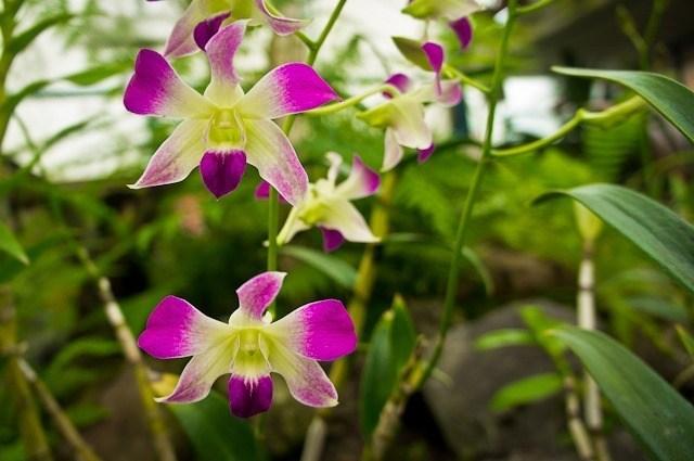 Que faire à Quito ? Découvrir l'orchidarium