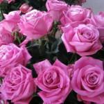 rosas2-150x150