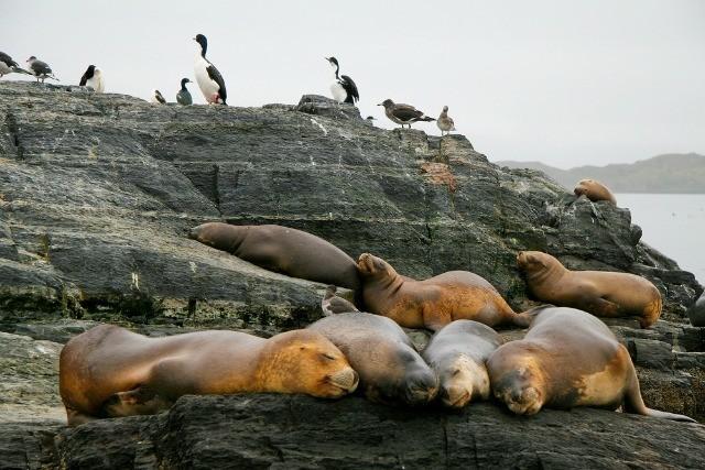 Que voir en Patagonie ? Ushuaïa