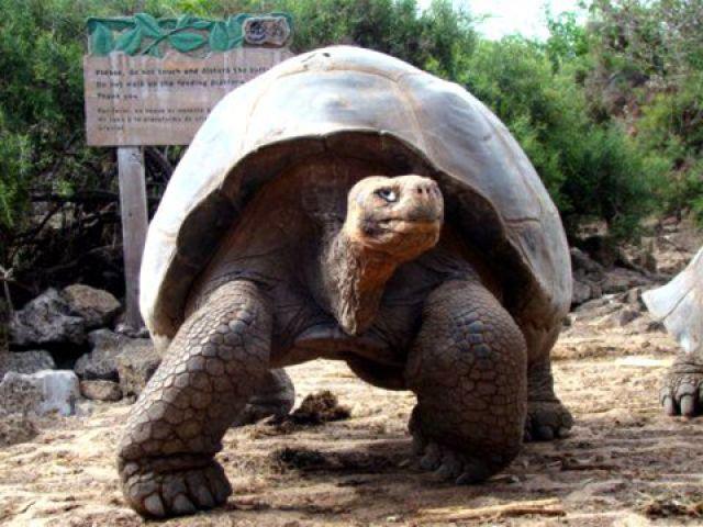 tortues des galapagos Equateur