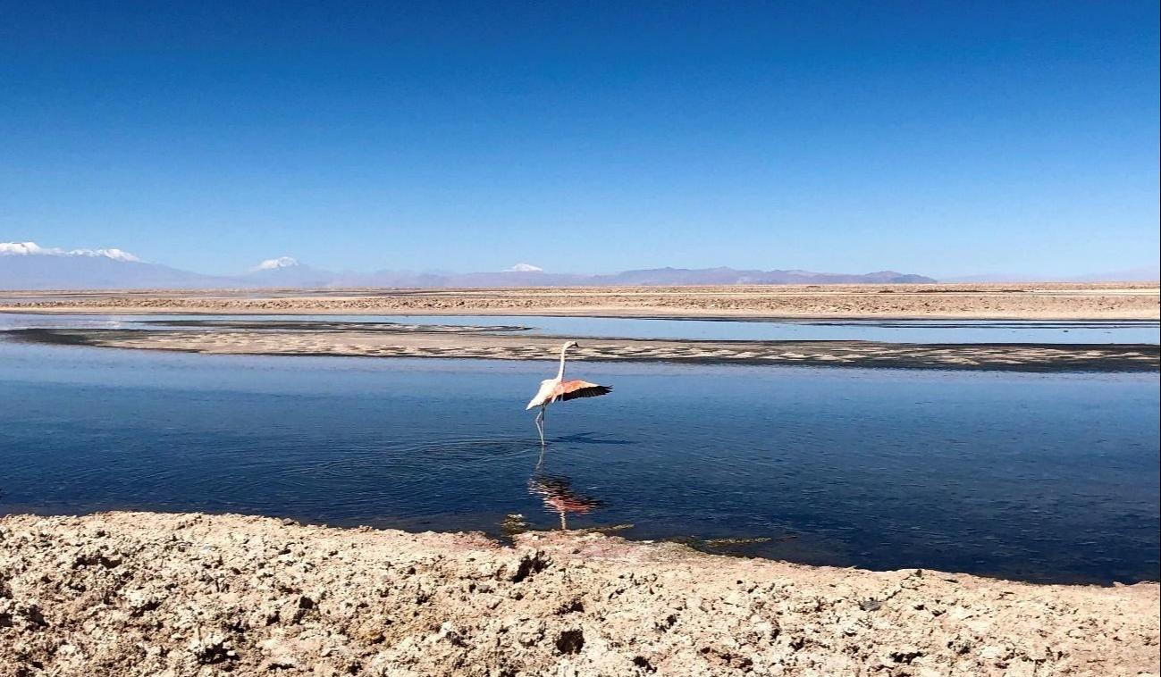 Laguna-chaxa