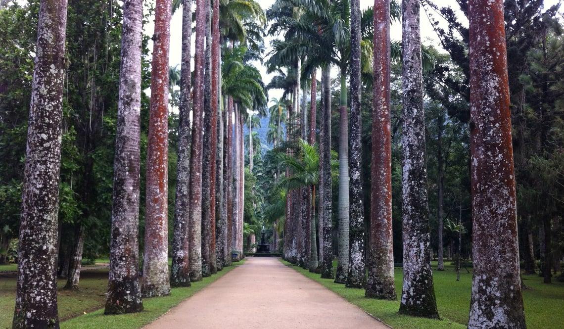 jardin-botanique-rio